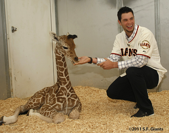 S.F. Giants, San Francisco Giants, 2012, Photo, Brandon Belt, giraffe