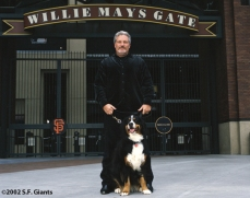 spca, sf giants, calendar, san francisco giants, photo, 2002, brian sabean