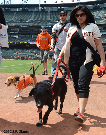 sf giants, san francisco giants, photo, 2012, dog days