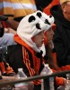 San Francisco Giants, S.F. Giants, photot, 2012, Fans