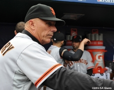 sf giants, san francisco giants, photo, nlcs, 2012, tim flannery