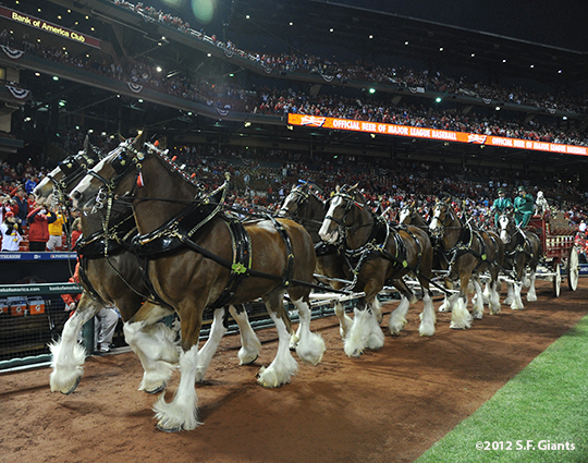 sf giants, san francisco giants, photo, 10/18/2012, nlcs game 4, budweiser Clydesdales