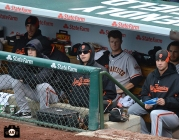 april 12, 2013,sf giants, chicago cubs, photo, tim lincecum, matt cain, madison bumgerner, ryan vogelsong, barry zito