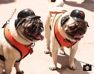 august 25, 2013, sf giants, photo dog days of summer