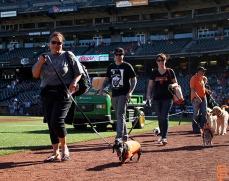 San Francisco Giants, S.F. Giants, photo, 2014, Dog Days