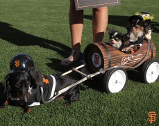 San Francisco Giants, S.F. Giants, photo, 2014, Dog Days
